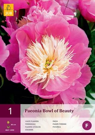 PEONIA BOWL OF BEAUTY