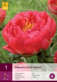 PEONIA CORAL SUNSET