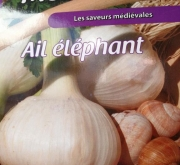 AJO DE SIEMBRA ELEFANTE (5 Dientes)