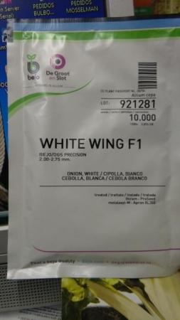 CEBOLLA WHITE WING