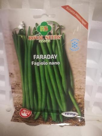 judia faraday