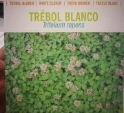 TRÉBOL BLANCO ENANO HUIA, HAIFA o RD84 Inoculado y...