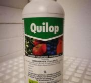 QUILOP (1 l.).