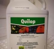 QUILOP (5 l.).