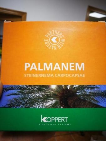 PALMANEM 50 ( Caja 2 x 25 millones)