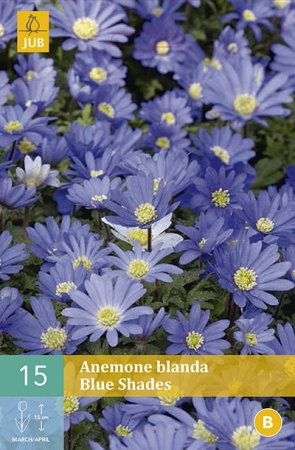 ANEMONA BLUE SHADES