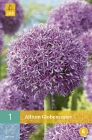 Alliums, Arums y Chionodoxas