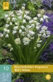HYACINTHOIDES HISPANICA WHITE
