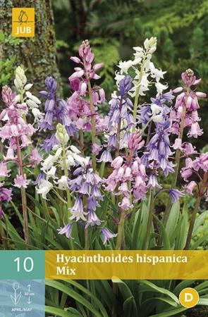 HYACINTHOIDES HISPANICA MIX