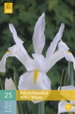 IRIS HOLLANDICA WHITE [O]