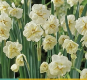NARCISOS SIR WINSTON CHURCHILL