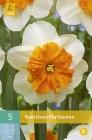 Narcisos Dobles y Papillon