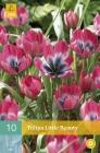Tulipanes Botánicos y Kaufmanniana