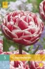 Tulipanes Dobles y Simples Tardíos