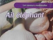 Ajos de Siembra Elefante