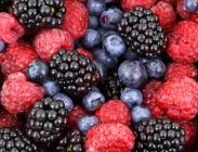 Frutales de Bosque