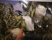 Bolsas de Papel para Melocotón y otras Frutas