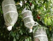 Sacos Especiales para Fruta Pequeña Reutilizables
