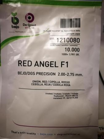 CEBOLLA RED ANGEL
