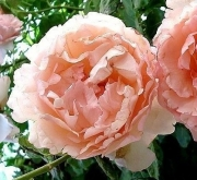 ROSAL CHARLENE DE MONACO ® Meidysouk