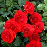 ROSAL TILT SYMPHONIE ® - Meivraivou