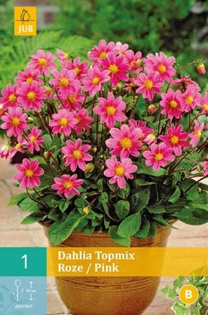 DALIA PINK TOPMIX