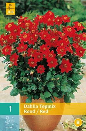 DALIA RED TOPMIX