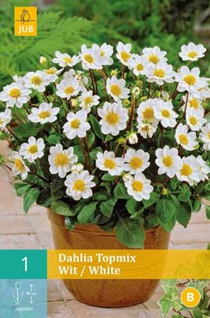 DALIA WHITE TOPMIX
