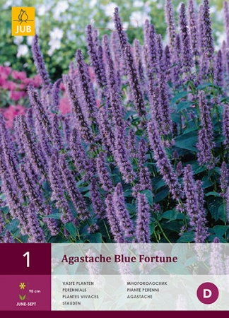 AGASTACHE BLUE FORTUNE