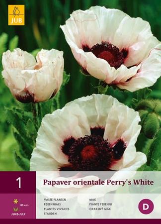 AMAPOLA PERRY'S WHITE