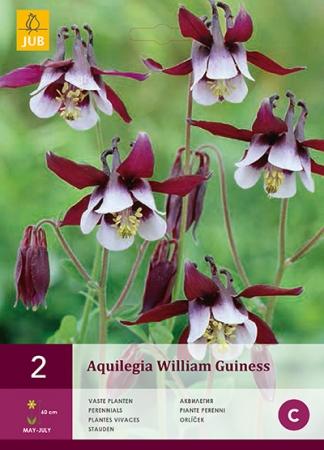 AQUILEGIA WILLIAM GUINESS
