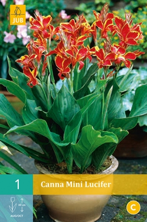 CANNA MINI LUCIFER