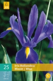 IRIS HOLANDICA BLUE