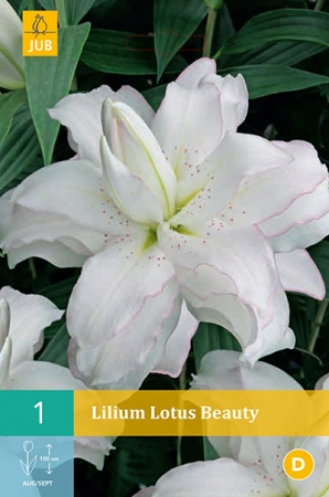 LILIUM LOTUS BEAUTY
