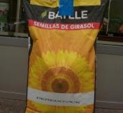semillas de girasol a buen precio