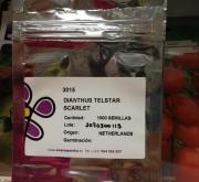 DIANTHUS TELSTAR SCARLET (1000 Semillas)