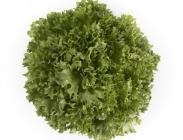 Semillas de Lechugas Crispy Verde