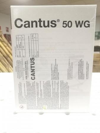 CANTUS (600 gr.). [IA]
