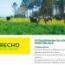 RAY GRASS HÍBRIDO ABERECHO (25 Kgr.).