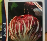 ACHICORIA ROJA DE CHIOGGIA 5 Sel. Violette