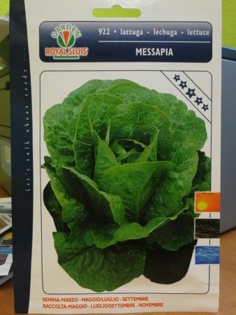 LECHUGA MESSAPIA (4 gr.).
