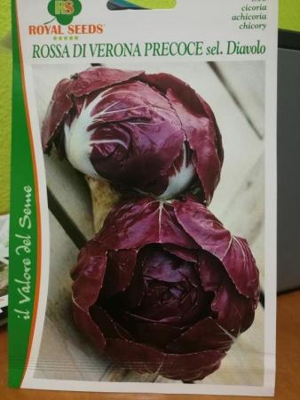 ACHICORIA ROJA DE VERONA PRECOZ Sel. Diavolo (Cerca de 1,5 gr.).