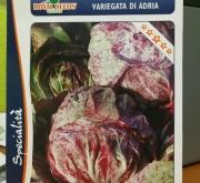 ACHICORIA VETEADA DE ADRIA (Cerca de 1,5 gr.).