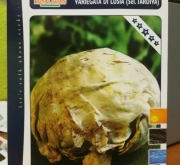 ACHICORIA VETEADA DE LUSIA TARDIA (Cerca de 1,5...