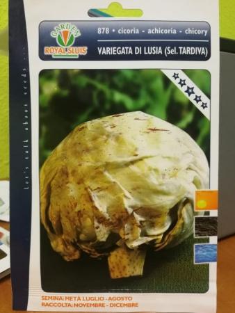 ACHICORIA VETEADA DE LUSIA TARDIA (Cerca de 1,5 gr.).