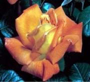 ROSAL LOUIS DE FUNES ® - Meirestif ( Pie Alto 100...