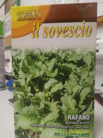 RABANO FORRAJERO (100 gr.).