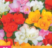 FREESIA DOBLE MIX XXL