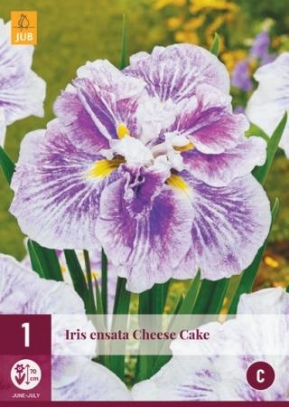 IRIS ENSATA CHEESE CAKE