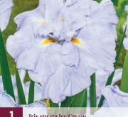 IRIS ENSATA ICE CREAM